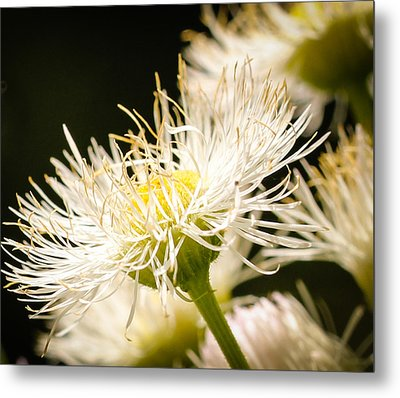 Metal Print featuring the photograph Wild Flowers by Cathy Donohoue