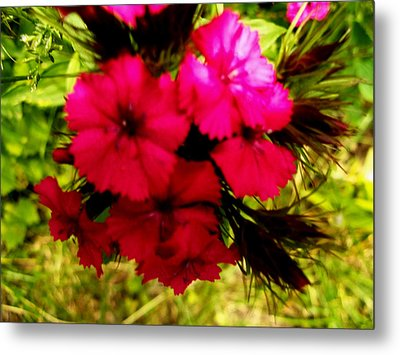 Metal Print featuring the photograph Wild Flowers by Eric Switzer