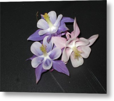 Wild Flowers On Black Metal Print