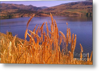 Wild Grain Metal Print by Chris Tarpening