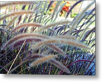 Wild Grasses In Autumn Metal Print by Ellen Tully