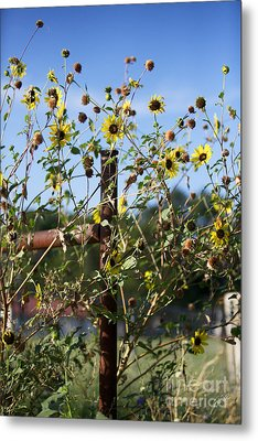 Metal Print featuring the photograph Wild Growth by Erika Weber