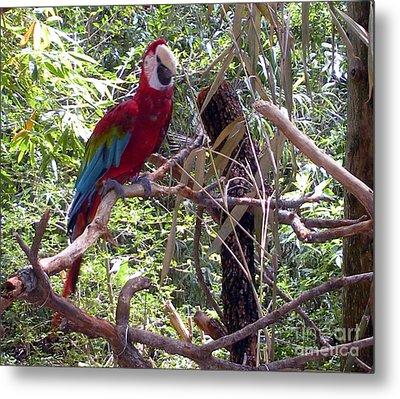 Metal Print featuring the photograph Wild Hawaiian Parrot  by Joseph Baril