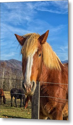 Wild Horse At Cades Cove In The Great Smoky Mountains National Park Metal Print