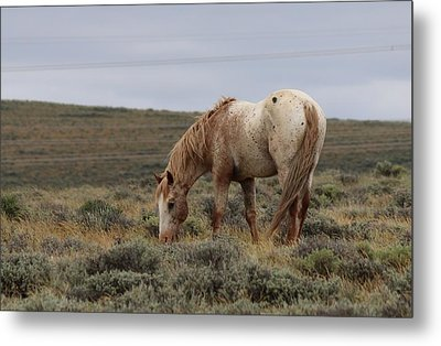 Wild Horse Metal Print by Christy Pooschke