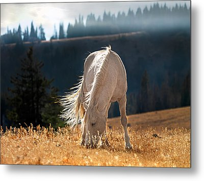 Wild Horse Cloud Metal Print by Leland D Howard