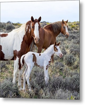 Wild Horse Family Portrait Metal Print by Nadja Rider