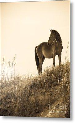 Wild Horse On The Beach Metal Print