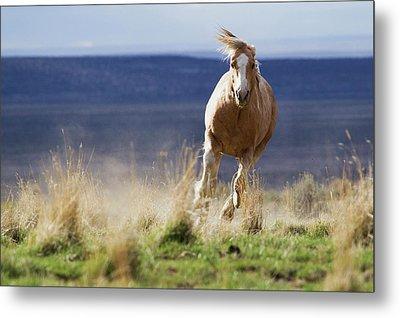 Wild Horse Running Metal Print