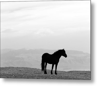 Wild Horse Silhouette Bw Metal Print by Leland D Howard