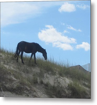 Wild Horses Of Corolla 3 Metal Print by Cathy Lindsey