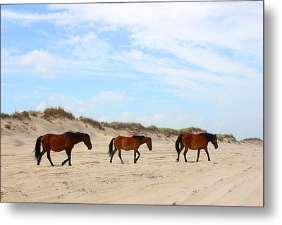 Wild Horses Of Corolla - Outer Banks Obx Metal Print