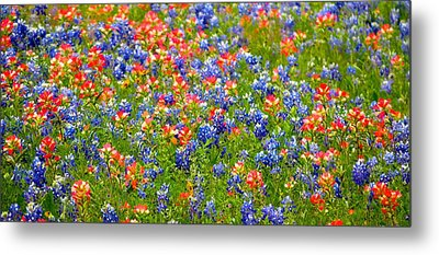 Wild In Texas Metal Print