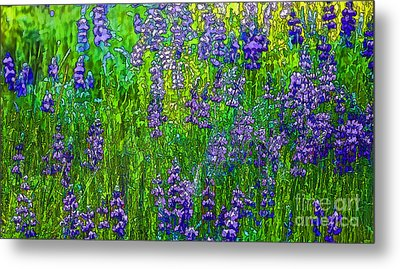 Wild Lupine Metal Print by Nancy Marie Ricketts