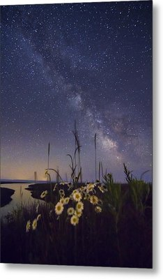 Wild Marguerites Under The Milky Way Metal Print by Mircea Costina Photography
