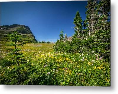 Wild Mountain Flowers Glacier National Park   Metal Print by Rich Franco