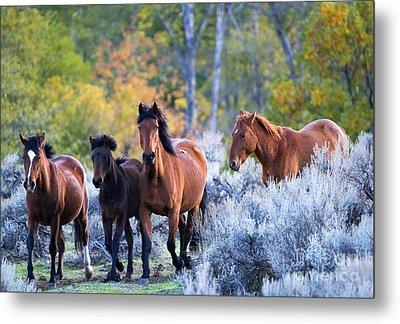Wild Mustang Autumn Metal Print