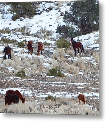 Wild Mustangs In A Nevada Winter Metal Print by Bobbee Rickard