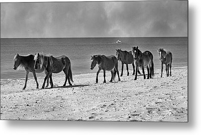 Wild Mustangs Of Shackleford Metal Print by Betsy Knapp