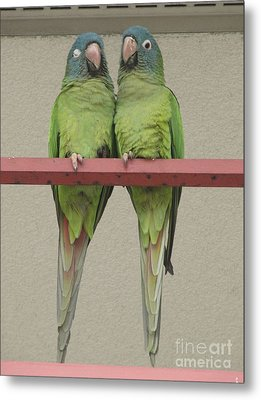 Wild Parrots Metal Print by Joan McArthur