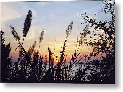 Wild Plumes Metal Print by Michele Kaiser