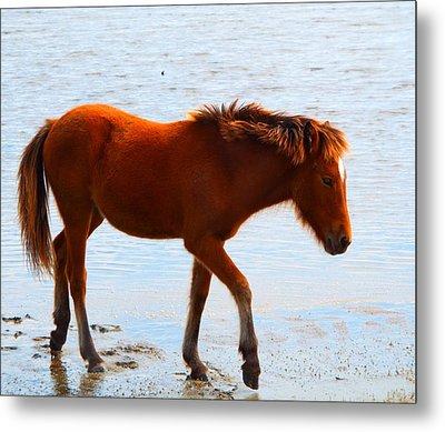 Wild Pony Metal Print by Cindy Croal