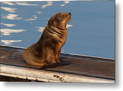 Wild Pup Sun Bathing - 2 Metal Print by Christy Pooschke