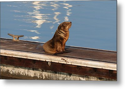 Wild Pup Sun Bathing Metal Print by Christy Pooschke