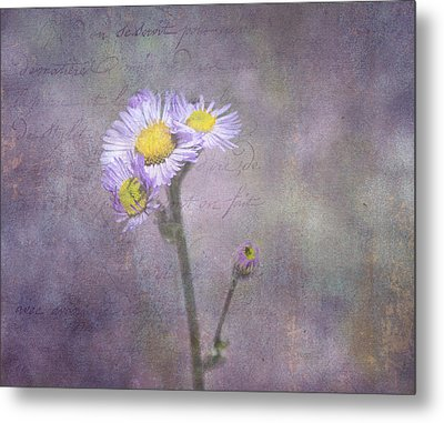 Wild Purple Aster  Metal Print
