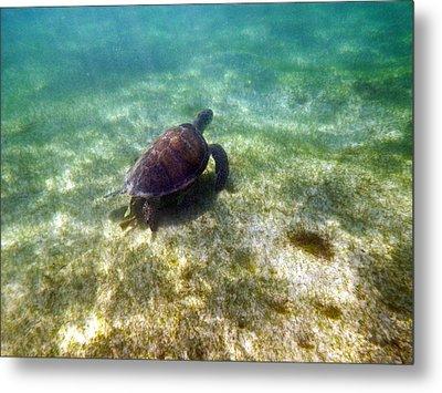 Wild Sea Turtle Underwater Metal Print by Eti Reid