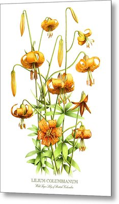 Wild Tiger Lilies Metal Print by Artellus Artworks