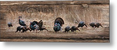 Wild Turkeys Metal Print by Lori Deiter