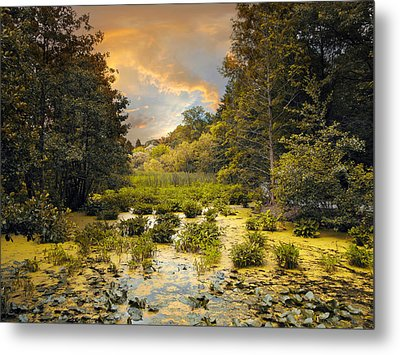 Wild Wetlands Metal Print