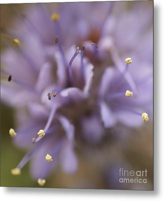 Wild Wildflower Metal Print