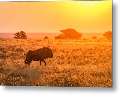 Wildebeest Sunset - Namibia Africa Photograph Metal Print by Duane Miller