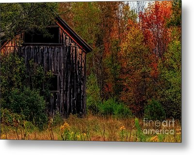Wilderness Barn Metal Print by Brenda Giasson