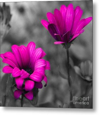 Wildflower 2 Metal Print