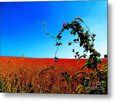 Wildflower And Soy Metal Print by Tina M Wenger