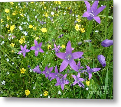 Metal Print featuring the photograph Wildflower Garden by Martin Howard