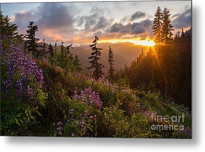 Wildflower Meadows Sunstar Metal Print by Mike Reid
