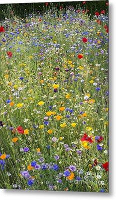 Wildflower Mix Metal Print