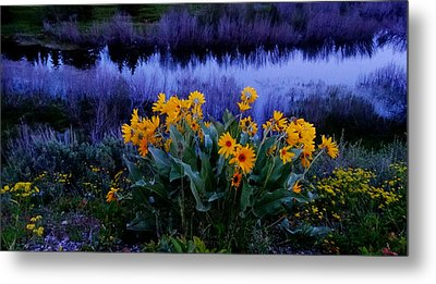Wildflower Reflection Metal Print by Dan Sproul