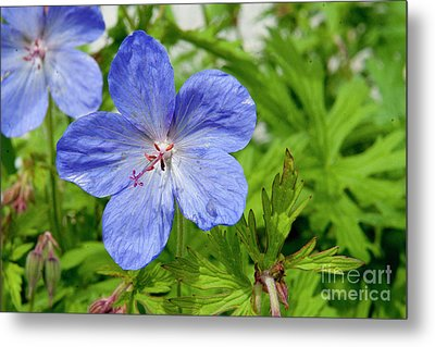 Metal Print featuring the photograph Wildflower by Rod Wiens