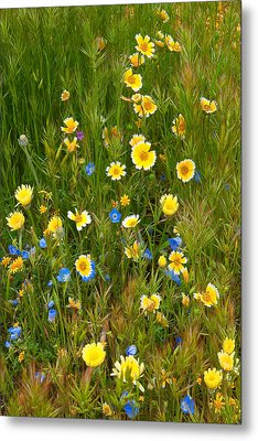 Metal Print featuring the photograph Wildflower Salad - Spring In Central California by Ram Vasudev