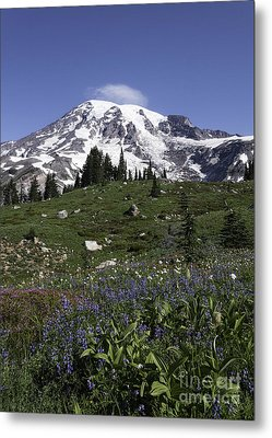 Wildflower Season At Mt Rainier Metal Print by Sharon Seaward