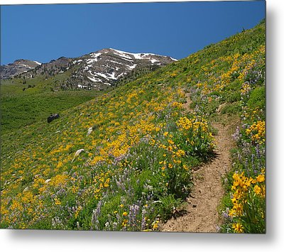 Metal Print featuring the photograph Wildflower Show by Jenessa Rahn