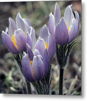 Wildflower Metal Print by Silke Brubaker