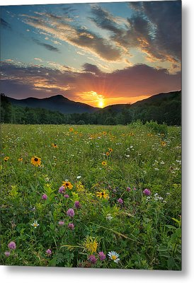 Wildflower Sunset Metal Print by Darylann Leonard Photography
