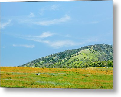 Afternoon Delight - Wildflowers And Cirrus Clouds - Spring In Central California Metal Print by Ram Vasudev