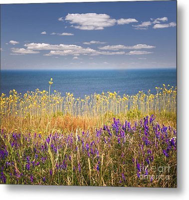 Wildflowers And Ocean Metal Print by Elena Elisseeva